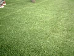 新・人工芝